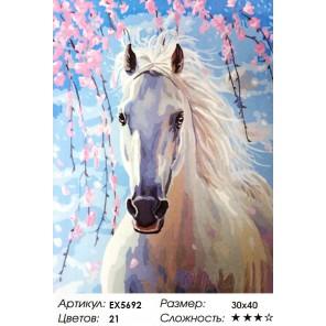 Количество цветов и сложность Белая лошадь Раскраска картина по номерам на холсте