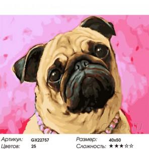 Мопсик Раскраска картина по номерам на холсте