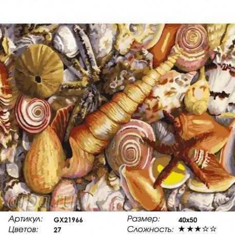 Количество цветов и сложность Ракушки Раскраска картина по номерам на холсте