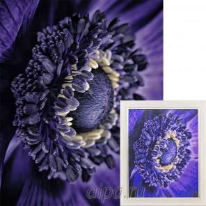 Цветок анемона Алмазная вышивка (мозаика) Гранни