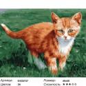 Рыжий котенок Раскраска картина по номерам на холсте