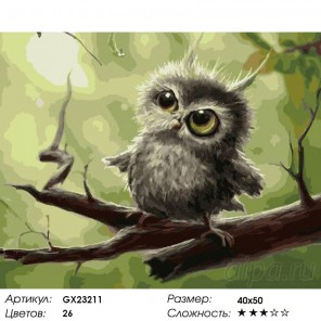 Подозрительная сова Раскраска картина по номерам на холсте
