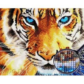 Взгляд тигра Алмазная мозаика вышивка Painting Diamond