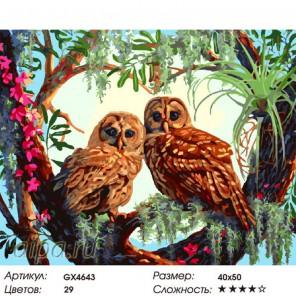 Пара сов Раскраска картина по номерам на холсте