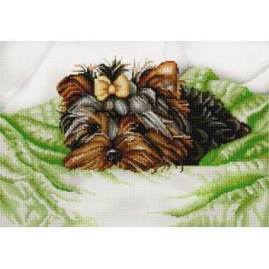 Йоркширский терьер Канва с рисунком для вышивки бисером Конек