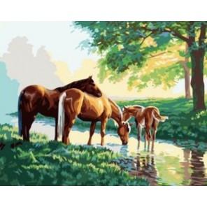 Лошади у ручья Раскраска по номерам акриловыми красками на холсте Iteso