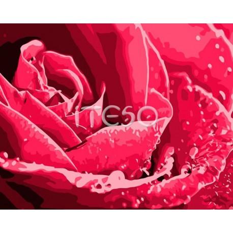 Розы бутон Раскраска по номерам акриловыми красками на холсте Iteso