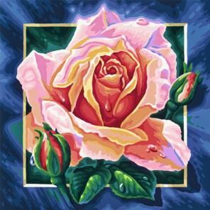 Роза Раскраска по номерам акриловыми красками Schipper (Германия)
